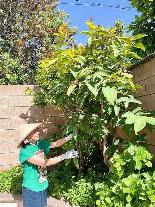 """""""Búp bê"""" Thanh Thảo tránh dịch COVID-19 fan mới có dịp ngắm khu vườn đầy hoa trái trong biệt thự triệu đô của cô ở Mỹ - Ảnh 5."""
