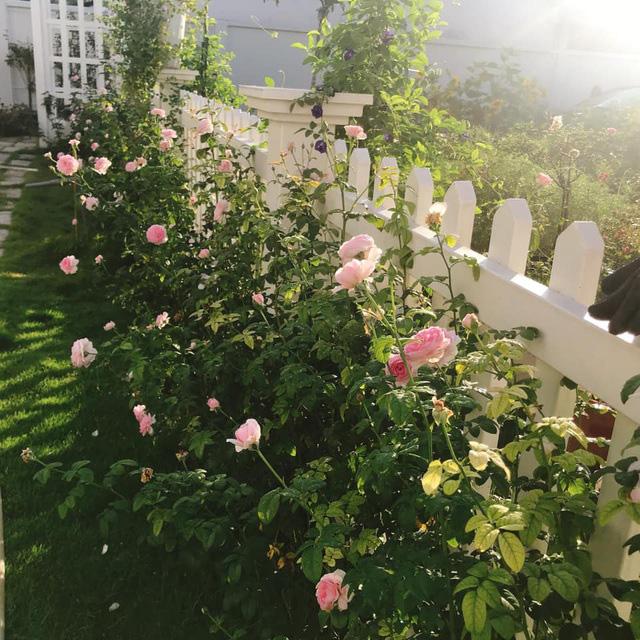 Biệt thự nhà vườn ngập tràn các loại hoa của gia đình ở Bình Dương - Ảnh 12.