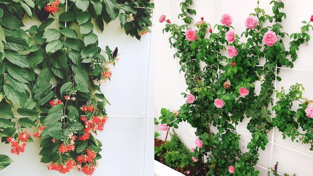 Biệt thự nhà vườn ngập tràn các loại hoa của gia đình ở Bình Dương - Ảnh 13.
