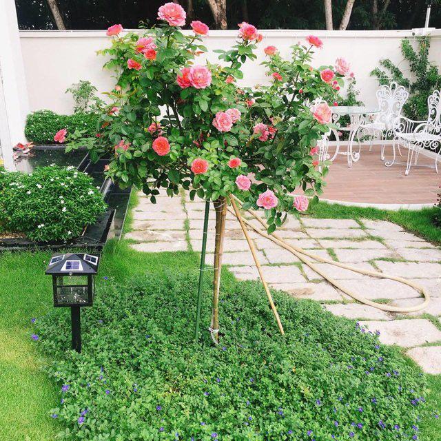 Biệt thự nhà vườn ngập tràn các loại hoa của gia đình ở Bình Dương - Ảnh 5.