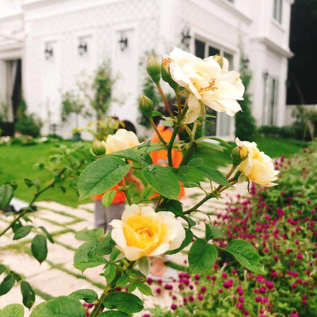 Biệt thự nhà vườn ngập tràn các loại hoa của gia đình ở Bình Dương - Ảnh 7.