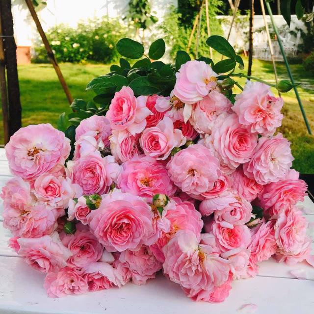 Biệt thự nhà vườn ngập tràn các loại hoa của gia đình ở Bình Dương - Ảnh 10.