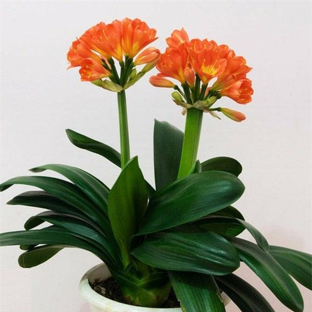 Trồng ngay loài hoa vừa sang trọng, yêu kiều vừa mang phong thủy tốt, rước quý nhân vào nhà bạn - Ảnh 3.