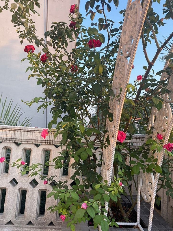Biệt thự sang trọng như một khu vườn hoa cổ tích của hoa hậu Giáng My - Ảnh 3.
