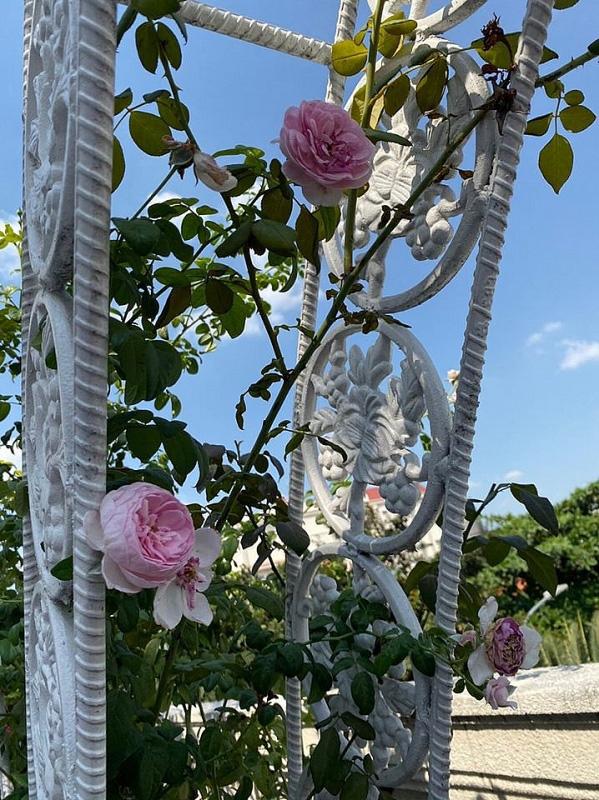 Biệt thự sang trọng như một khu vườn hoa cổ tích của hoa hậu Giáng My - Ảnh 5.