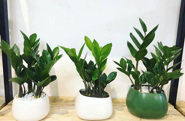 7 loại cây nên trồng trong nhà vào mùa đông - Ảnh 3.