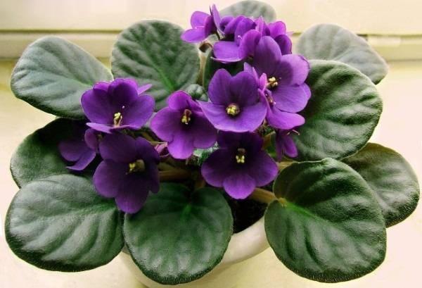 7 loại cây nên trồng trong nhà vào mùa đông - Ảnh 6.
