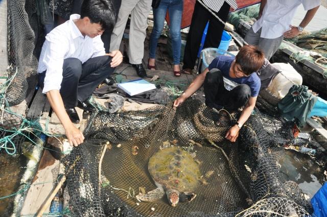 Thả rùa biển về tự nhiên 1
