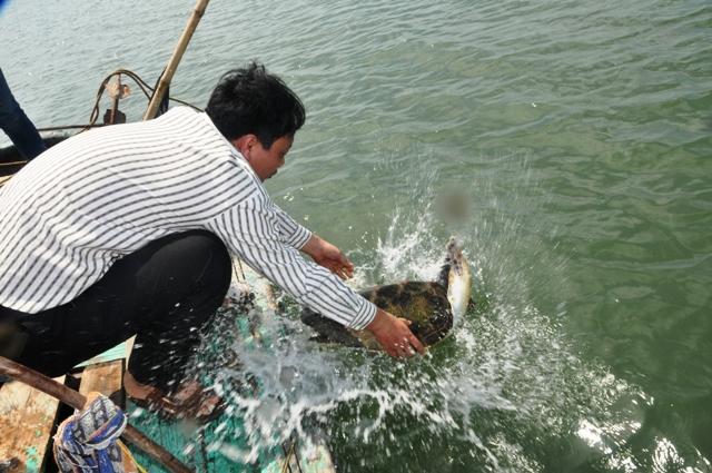Thả rùa biển về tự nhiên 4