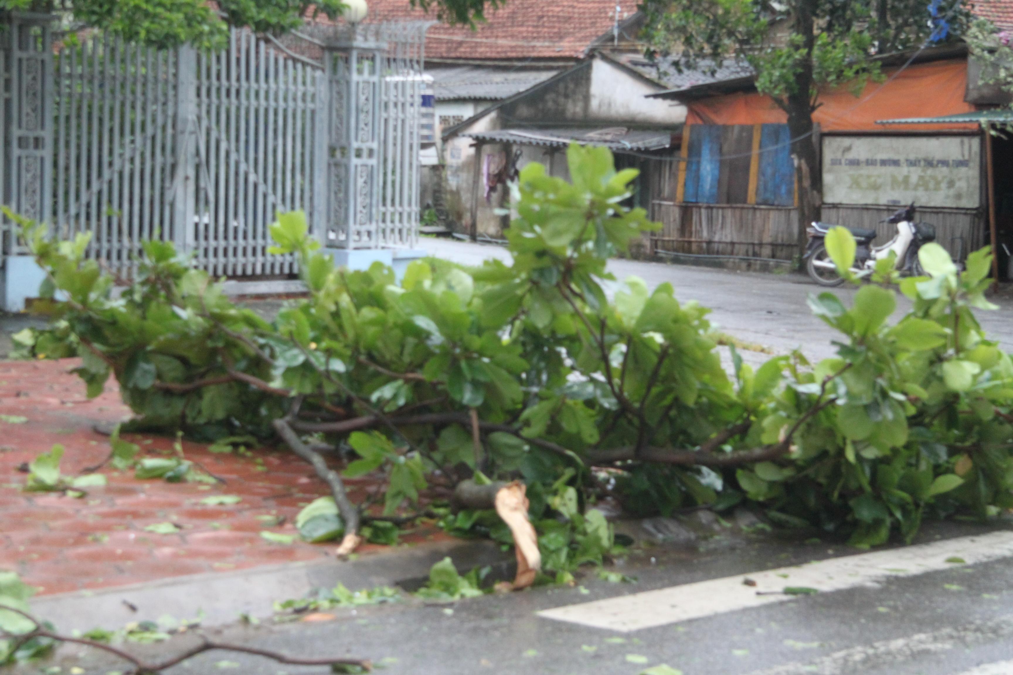 Cận cảnh bão số 5 đổ bộ vào Quảng Ninh 8