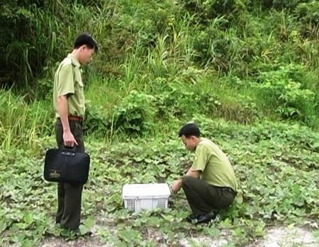 Quảng Ninh: Thả 2 cá thể rắn hổ mang chúa  2