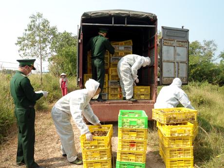 Quảng Ninh: Bắt giữ 2 vụ vận chuyển hơn 30 nghìn con gà giống nhập lậu 1