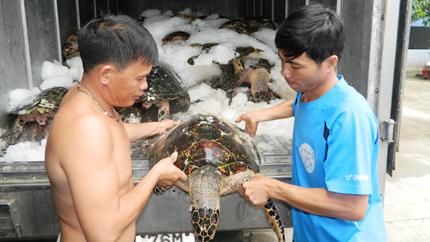 Hiểm họa từ những chuyến săn rùa biển 1
