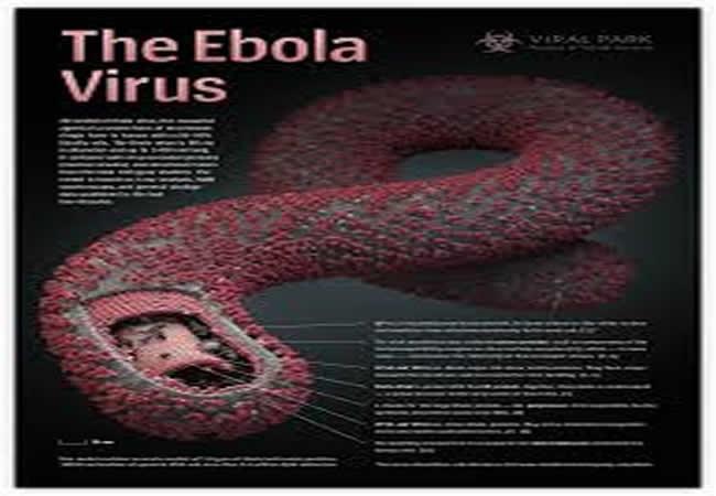 Nhận biết các triệu chứng và cách phòng tránh bệnh dịch Ebola 1