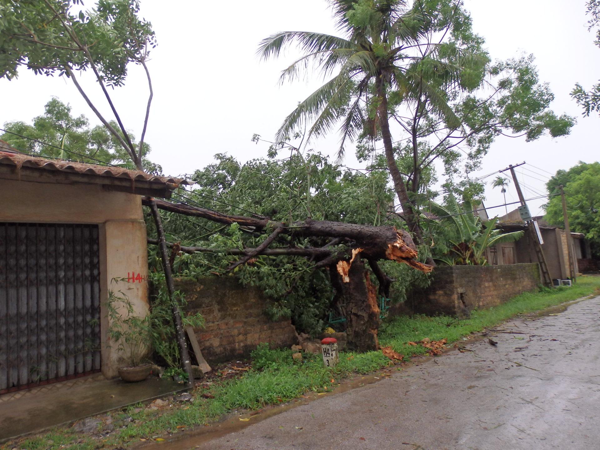 Thanh Hóa: Thiệt hại ban đầu do bão số 6 gây ra ước tính 167 tỷ đồng 1