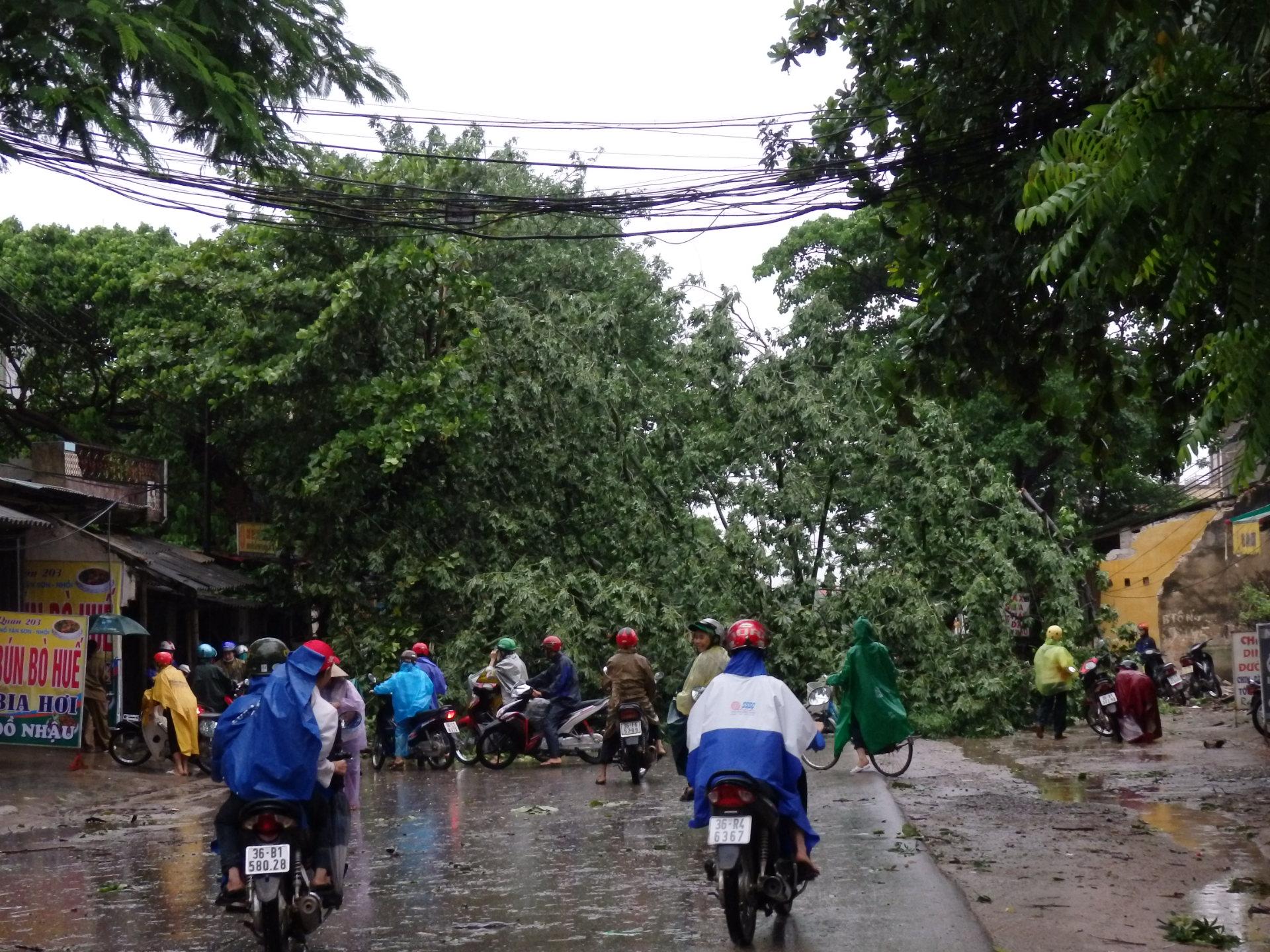 Thanh Hóa: Thiệt hại ban đầu do bão số 6 gây ra ước tính 167 tỷ đồng 2