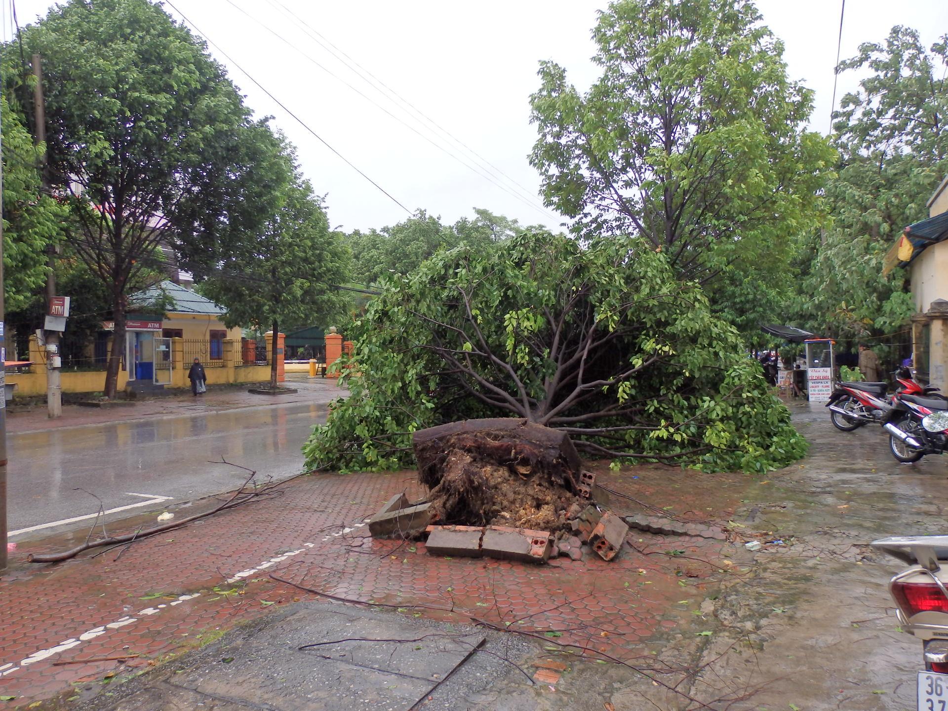 Thanh Hóa: Thiệt hại ban đầu do bão số 6 gây ra ước tính 167 tỷ đồng 3