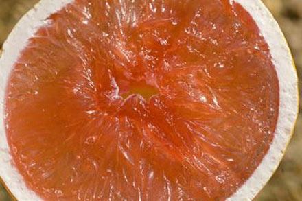 Những thực phẩm đơn giản chống ung thư gan 1