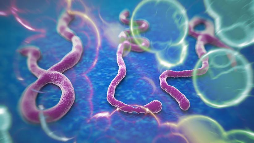 Dịch Ebola và vấn đề vệ sinh an toàn thực phẩm 1