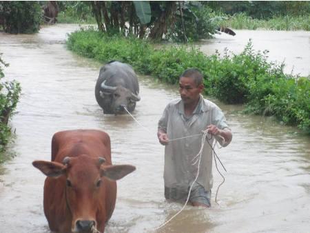Cận cảnh người dân miền Trung vật lộn với lũ cứu tài sản, gia súc, gia cầm 1
