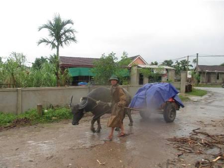 Cận cảnh người dân miền Trung vật lộn với lũ cứu tài sản, gia súc, gia cầm 4