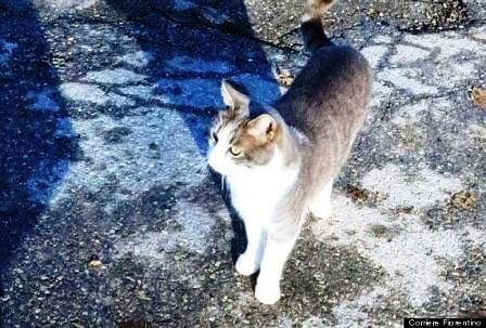 Chú mèo quanh quẩn bên mộ chủ hơn 1 năm 1