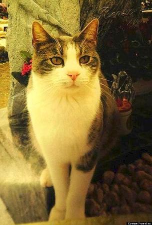 Chú mèo quanh quẩn bên mộ chủ hơn 1 năm 2