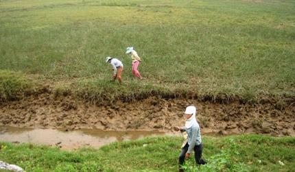 Nga Sơn, Thanh Hóa: Nhìn vào cói, đói quanh năm 2
