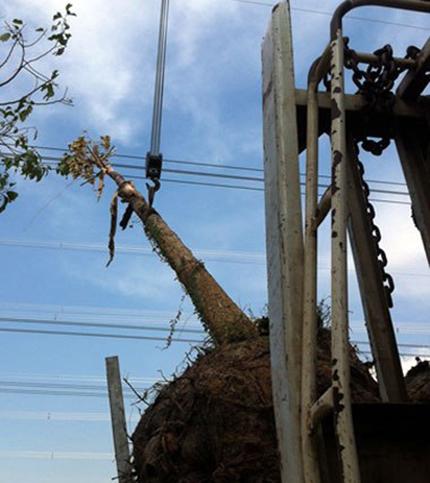 Làm rõ trách nhiệm vụ mất điện toàn miền Nam 1