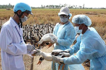 Phòng chống dịch bệnh những tháng cuối năm: Nhiều nguy cơ bùng phát dịch 1