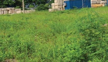 Vì sao dự án căn hộ 12 triệu/m2 ở Linh Đàm vẫn là bãi cỏ hoang? 1