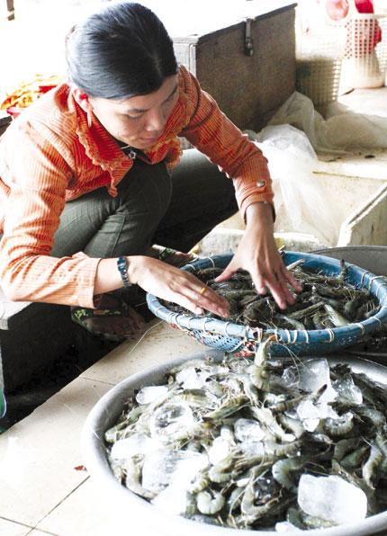 Bảo quản hải sản bằng urê, chất javel: Giảm trí nhớ, hại gan thận 1