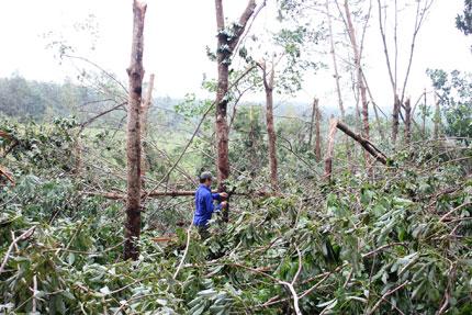 Quảng Bình: Dân thẫn thờ sau bão 2