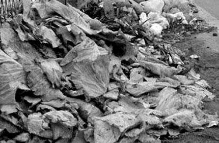 Hà Nội: Rác thải ngập tuyến đường gom 1