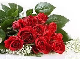 Lòng bạc bẽo như cỏ dại, lòng biết ơn như hoa hồng! 1