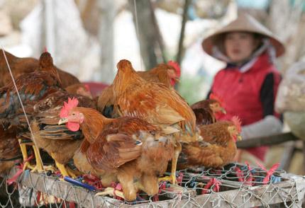Nguy cơ cúm A/H7N9 vào Việt Nam rất lớn 1