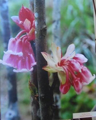 Đà Nẵng tổ chức triển lãm đa dạng sinh học 4