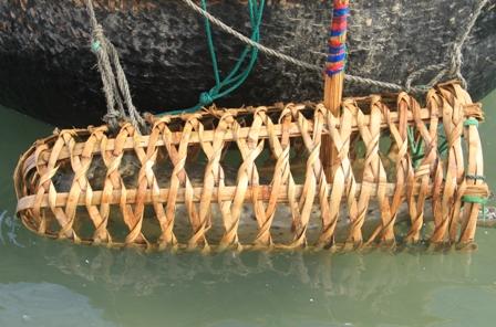 Bắt được hải cẩu gần bờ biển ở Đà Nẵng 1