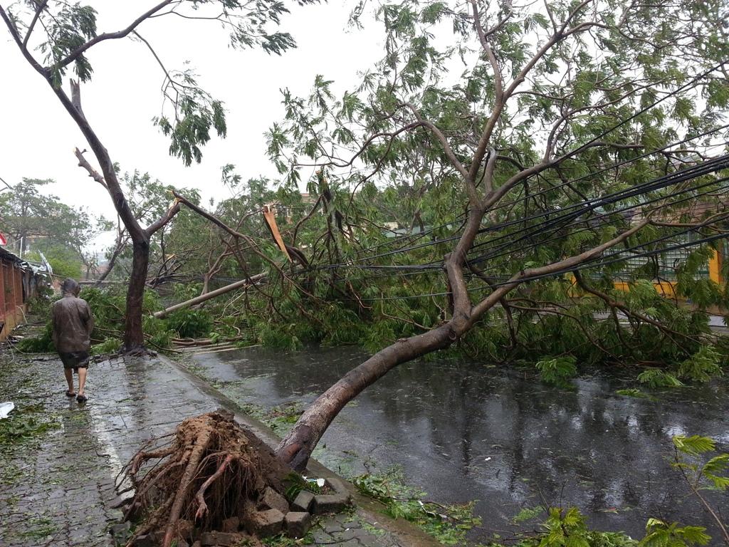 Đà Nẵng tan hoang sau bão số 11 1