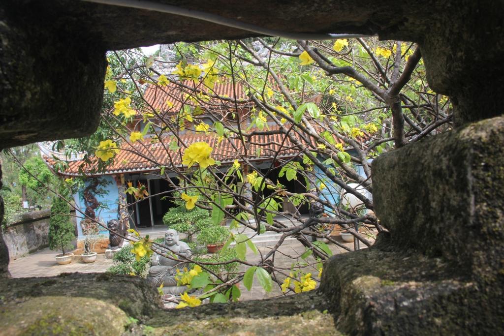 Cận cảnh hoa mai nở rợp trời trên núi Ngũ Hành Sơn 15