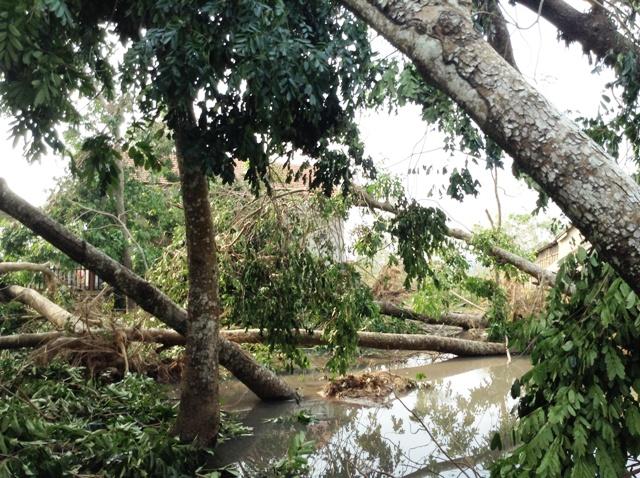 Cao Quảng tan hoang sau bão 8