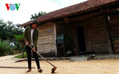 Ngoài việc học trên lớp, Hoàng Ngọc Cường tham gia làm nương, chăn bò giúp bố mẹ.