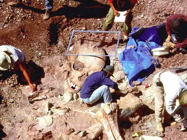 Cách đây không lâu, một khu mộ cổ ở Ai Cập chứa một xác ướp dài tới 2,5m đã được tìm thấy. Hộp sọ hoàn toàn không có mũi, tai và miệng rất rộng nhưng lại không có lưỡi. Theo nhà khảo cổ học Gaston de Villars, niên đại của xác ướp này có thể vào khoảng 4.000 năm.