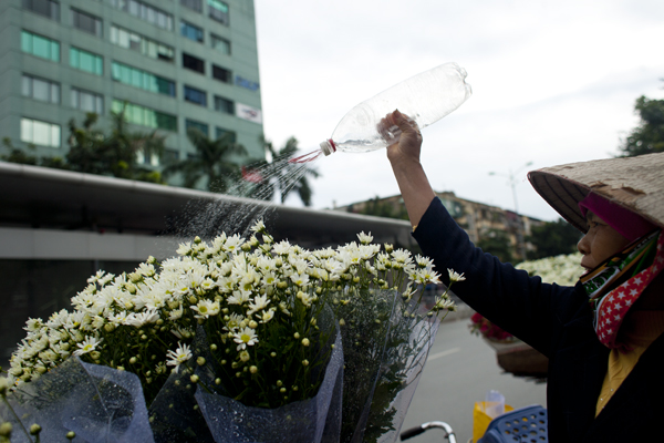 Người bán thường xuyên tưới nước để hoa luôn giữ được sự tươi tắn.