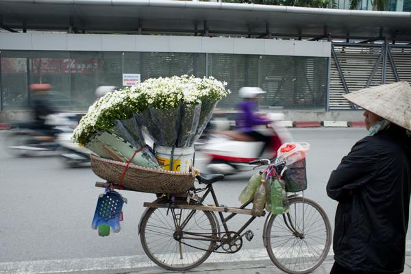 Rất dễ bắt gặp các xe hoa cúc họa mi ở lề đường.