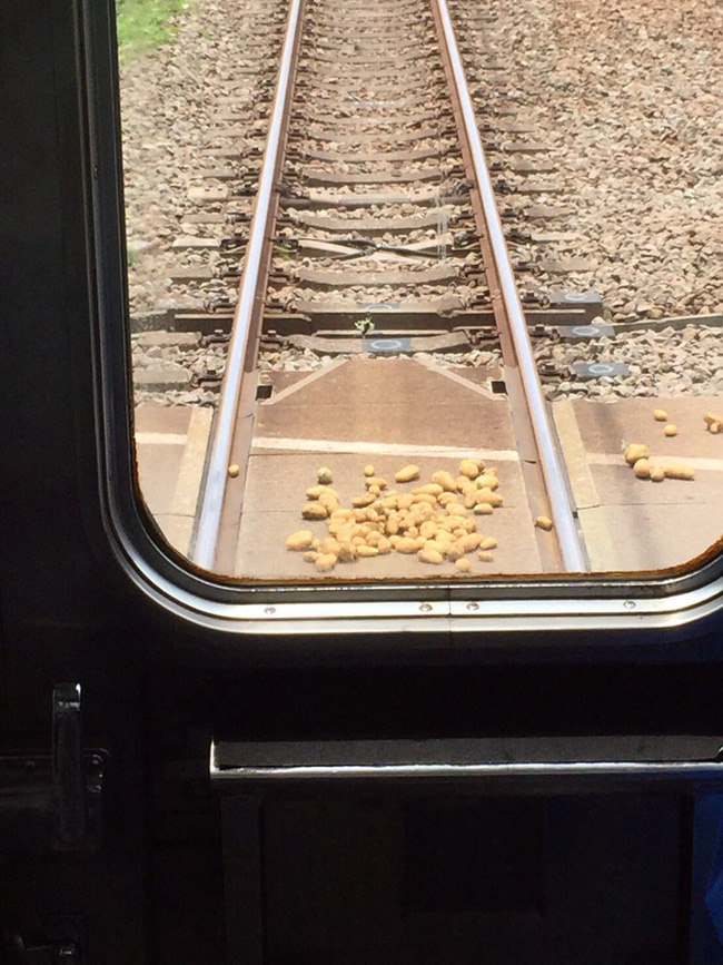 Những củ khoai nằm lăn lóc trên đường ray.