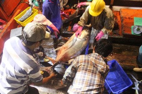Ngư dân bắt được loại cá hiếm