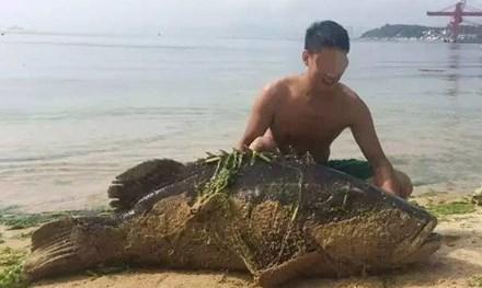 Vừa qua, ở Quảng Đông, Trung Quốc, một du khách bắt được một con cá mú khổng lồ dài gần 2m, nặng 125kg, gây xôn xao dư luận.