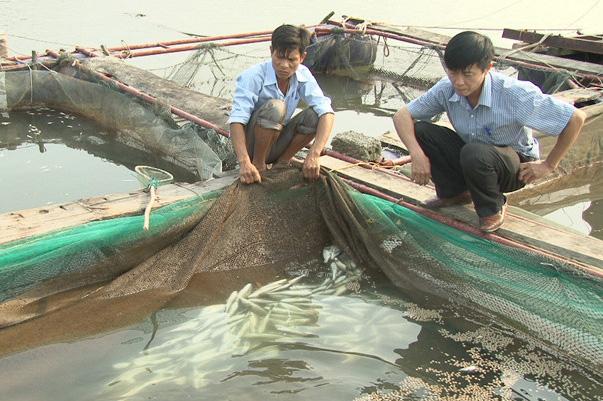 Vẫn chưa tìm ra nguyên nhân cá chết hàng loạt ở biển Vũng Áng. Nguồn: Tiền Phong