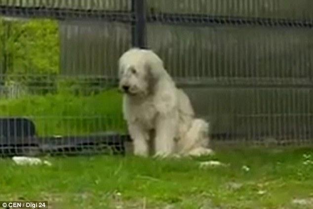 Chú chó với gương mặt buồn thiu.